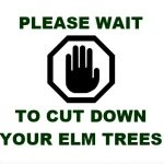 Marked Elm Trees