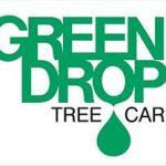 Green Drop – Dutch Elm Follow Up